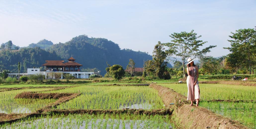 Rijstvelden van Chiang Rai