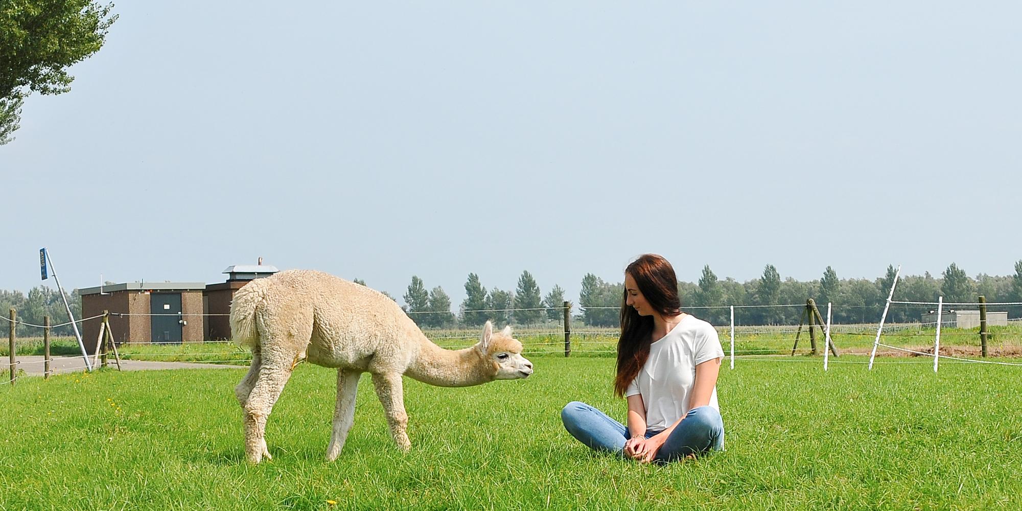 Alpaca Lifestyle by Linda