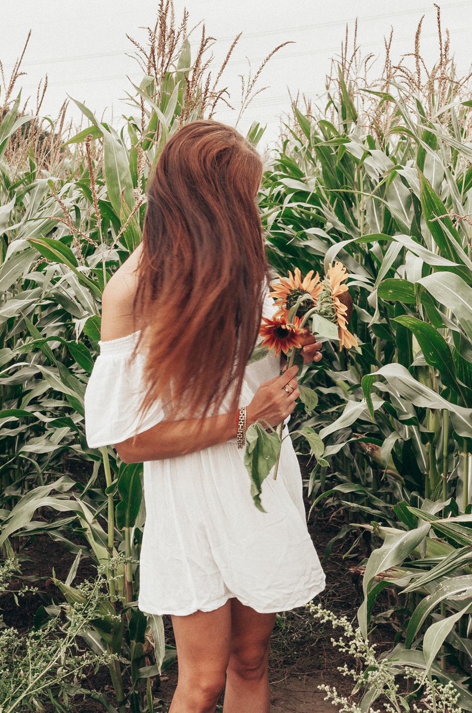 corn field Lifestyle by Linda by tezza presets